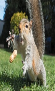 Teaching a Squirrel to do Tricks, Almost